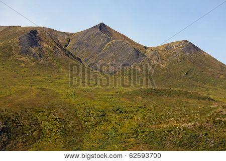 Mountain Tundra Bug-brush Yukon Territory Canada