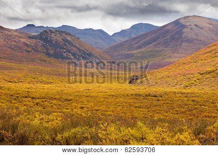 Fall Color Tombstone Territorial Park Yukon Canada