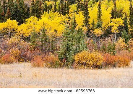 Colorful Fall Yukon Canada Boreal Forest Taiga