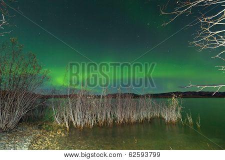 Aurora Borealis Display Lake Laberge Shore Willows