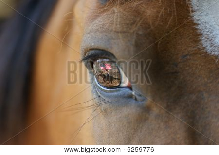 Horse close up with reflection in its eye