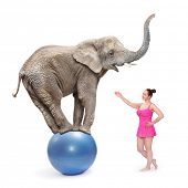 Circus clown girl and elephant balancing on a blue ball. poster
