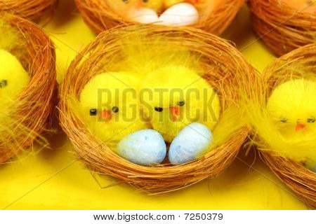 Chickens On Eggs