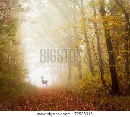 Autumn forest and deer
