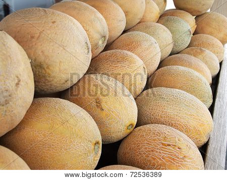 Rows Of Cantaloupes