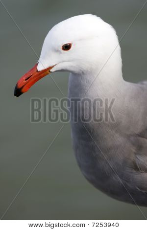 Seagull With Background Of The Sea