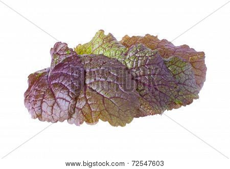 The Heap with Lush Mustard Leaves