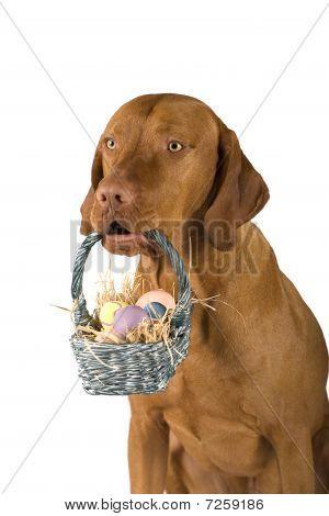 Dog Holding Basket Of Easter Eggs