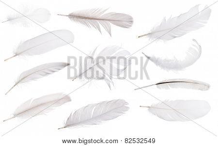 set of light grey feathers isolated on white background