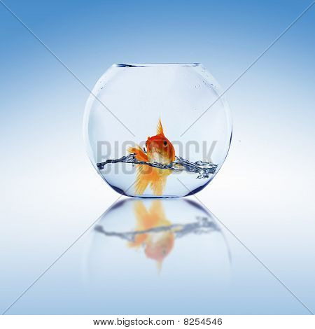Goldfish in an Aquarium with water. Collage. poster