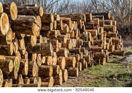 Chopped Firewood Logs