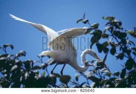 Storch on tree