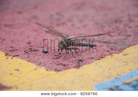 Dragonfly Takeoff