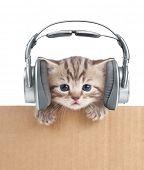 Funny kitten cat in headphones in cardboard box poster