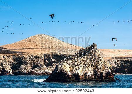 Ballestas Islands, Paracas National Reserve In Peru