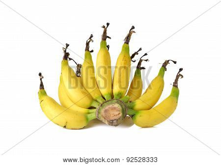 Ripe Small Cavendish Banana On White Background