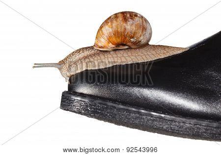 Snail On Boot Toe