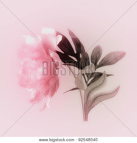 art vintage watercolor blurred floral pattern with pink peony isolated on light pink background with space for text