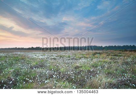sundown on swamp in summer Drenthe Netherlands