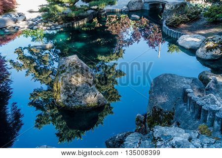 Trees are refected from a serene pond in Seatac Washington.