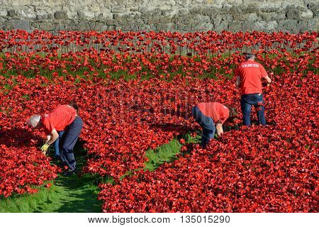 LONDON - OCTOBER 03: Volunteers installing the 888246 ceramic poppies on October 3 2014 to commemorate the First World War British and colonial military fatalities located at the Tower of London.