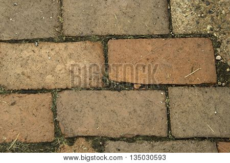 A red brick patio path with unfilled cracks between.
