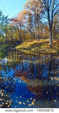 Pond In Autumn Park.