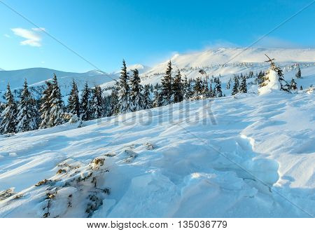 Icy Fir Under Snowdrift On Slope (in Front).