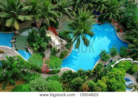 Palm and Swimming pool top view