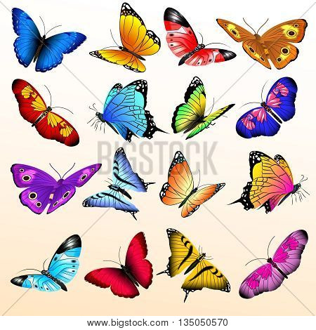 Colorful realistic butterflies big vector set. Butterfly with color pattern on wing, summer butterfly of illustration