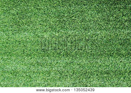 landscape of grass field and green environment public park use as natural background