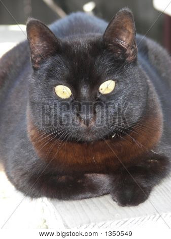 black cat with green eyes laying down poster