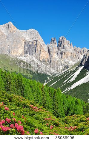 Torri del Vajolet in Dolomites at the foreground of blooming azaleas,Trentino, South Tirol, Italy