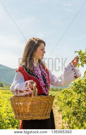 Rose Picking Ritual