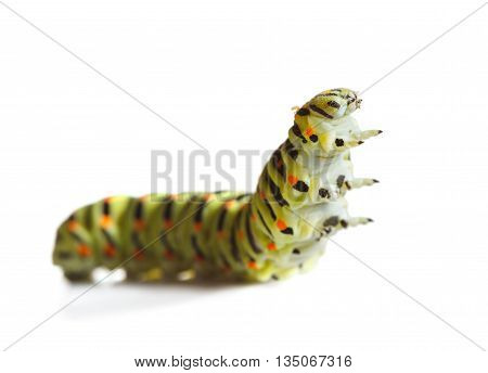 Macro of butterfly larva isolated on white low angle view