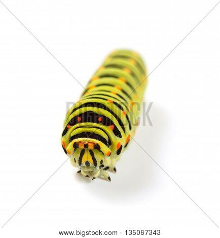 Caterpillar Portrait
