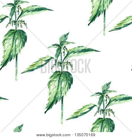 Hand drawn watercolor botanical illustration of the nettle plant. Nettle drawing isolated on the white background. Medical herbs illustration, herbarium. seamless pattern. vector