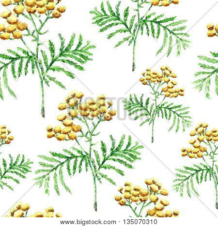 Hand drawn watercolor botanical illustration of the tansy plant. Tansy drawing isolated on the white background. Medical herbs illustration, herbarium. seamless pattern. vector