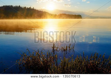 detail of grass halm at a lake in magical morning time with dawning sun. Trees as leftovers of a mole
