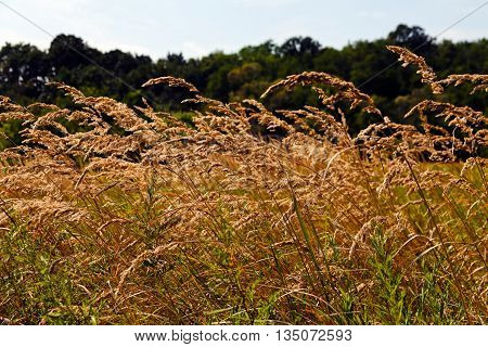 Meadow Vegetation