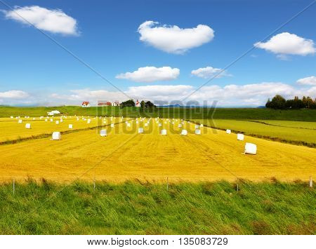 Rural field after harvest. Grass clippings packaged in white plastic bags. Far seen a farm with a red roof and a neat outbuildings