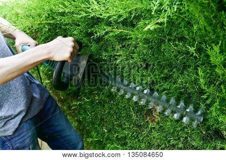 closeup of a young caucasian man pruning a hedge with an electric hedge trimmer