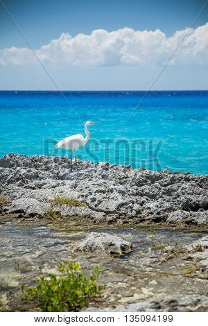 Heron near the sea in Cozumel Mexico