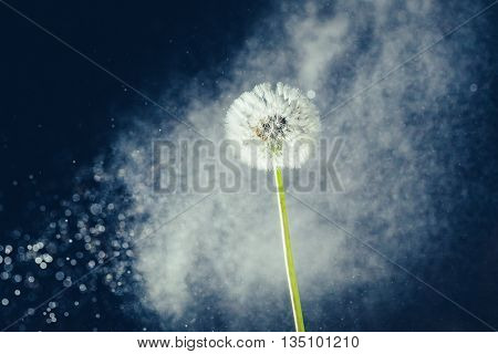 dandelion flower against water particles background