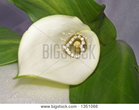 Heart Of Lily