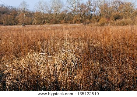 Dried Grass  In Autumn