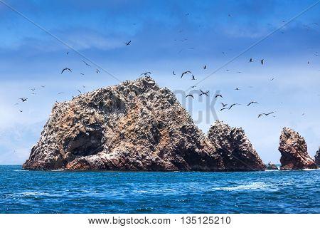 ocean, island and birds on a sunny day
