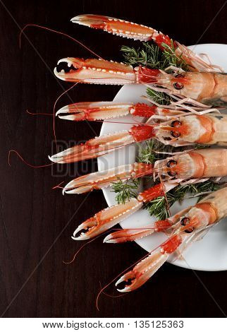 Arrangement of Four Delicious Raw Langoustines with Rosemary on White Plate closeup on Dark Wooden background. Top View