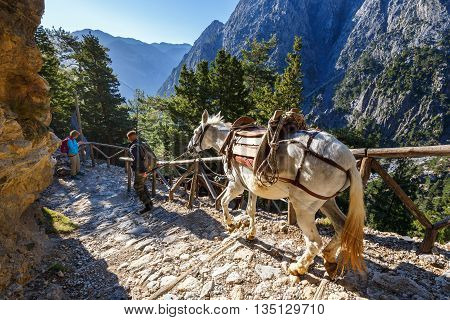 Samaria Gorge, Greece - May 26, 2016: Horses Led By A Guide, Are Used To Transport Tired Tourists In