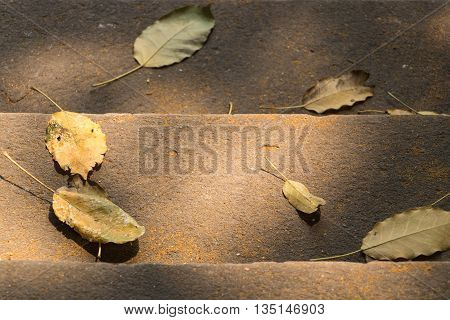 Fall on the floor leaves on background